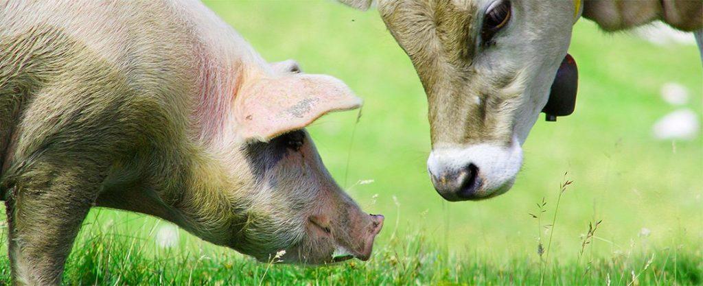 Landwirtschaft - Düngemittel und Stalleinstreu