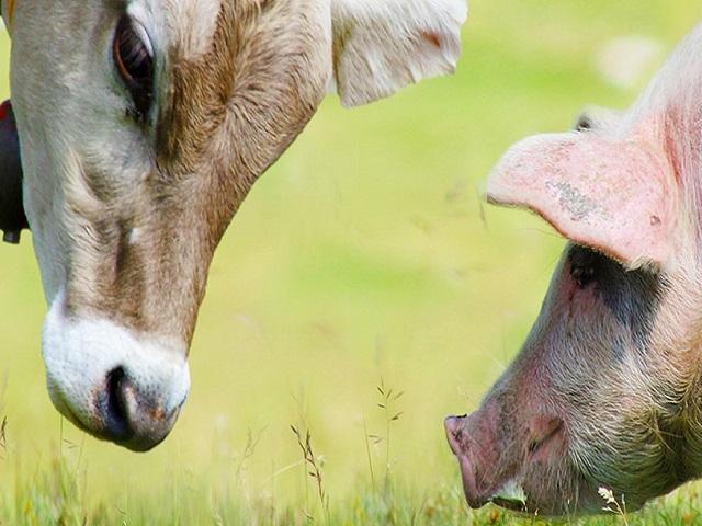 Hessischer Schweinetag & Zukunft Milch – 04.-05.12.2019