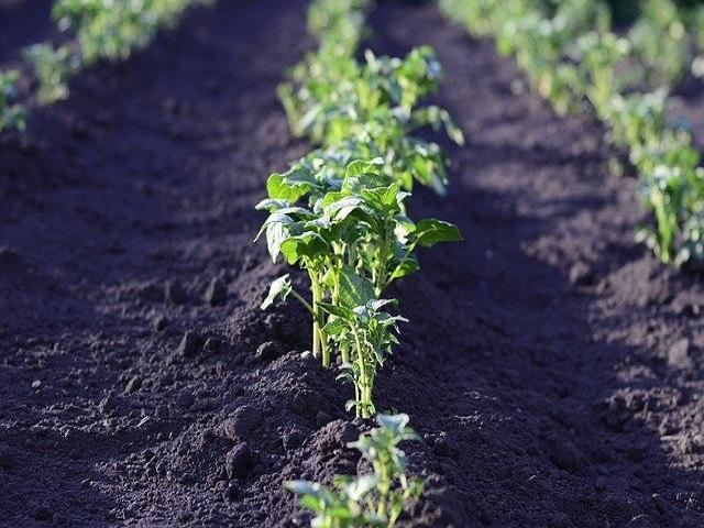 5. Internationale Kartoffelbautagung – 03.-05.12.2019